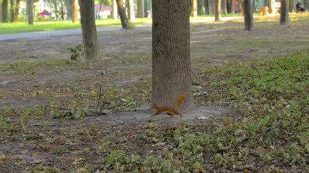squirrel fur : A Squirrel In The Park
