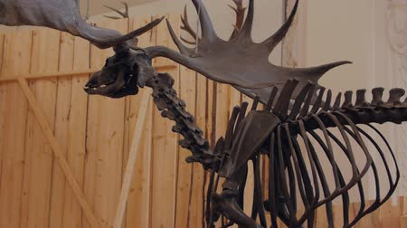 ぬいぐるみの : Skeleton Of The Moose