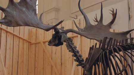 ぬいぐるみの : The Moose Elk Skeleton