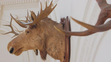 toc : Le trophée Moose Head