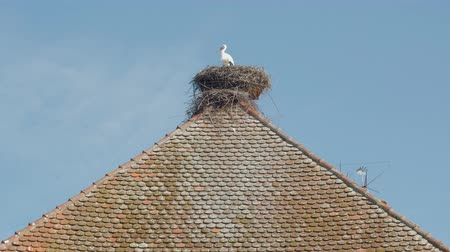 ornitologie : Stork In The Nest On Roof