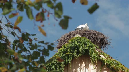klimop : The Stork In The Nest