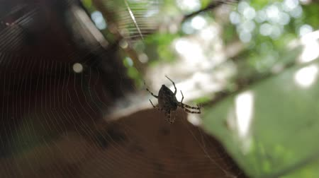 hera : Spider On Big Web Eats