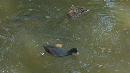ужение : Ducks And Fish Eat Food
