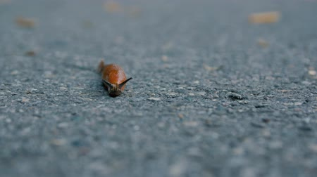 limace : Slug Crawling On The Road Vidéos Libres De Droits