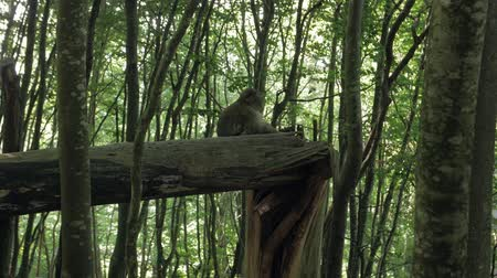 barbary : Monkey In Forest On Tree