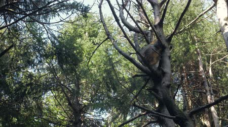barbary : Monkey Sleeping On A Tree