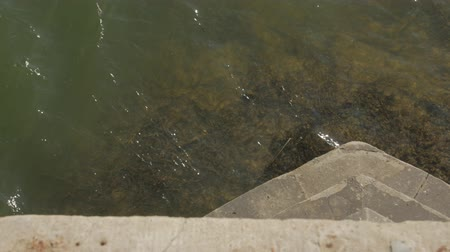 alga : River Water Under Bridge View
