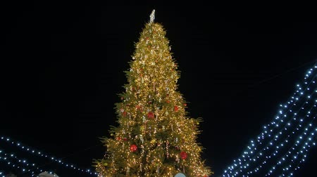 Christmas Tree In City Center