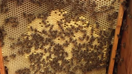 honeybee : Background hexagon wax texture, wax filled with honey honey Stock Footage