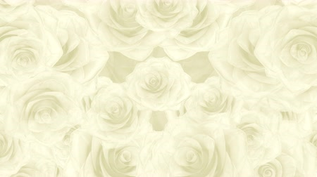 fiancee : Beautiful soft seamless loop 3D animation like intro for wedding, valentines day or memories video. On this 3d footage big white rose buds falling down on abstract white background.