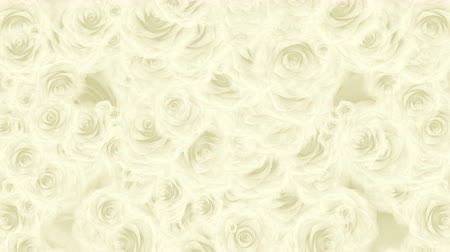 Beautiful very soft seamless loop 3D animation like intro for wedding, valentines day or memories video. On this 3d footage many white rose buds falling down on abstract white background.