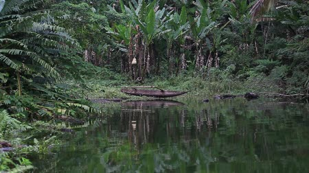 floresta tropical : Lake Balinsasayao in Dumaguete on Negros Island, Philippines