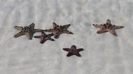 esotico : Stelle marine in mare
