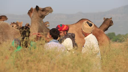 tribo : PUSHKAR, INDIA - OCTOBER 28, 2014: Unidentified Indian men attended the annual Pushkar Camel Mela. This fair is the largest camel trading fair in the world. Vídeos