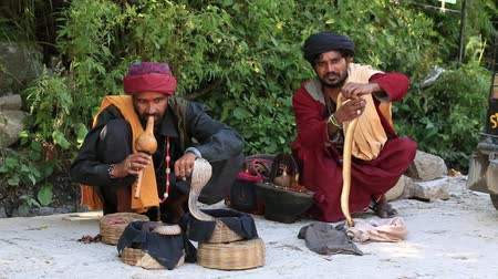 yılan : MANALI, INDIA - SEPTEMBER 14 2014: Two unidentified snake charmer enchanting cobras in a street of Manali, India. People practice this dangerous job as a way of begging charity Stok Video