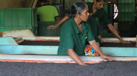 pulverizado : NUWARA ELIYA, SRI LANKA - NOVEMBER 10, 2014: Unidentified Sri Lankan women are involved in sorting and drying tea leaves in tea factory