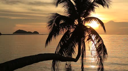 coconut palm tree : Video 1920x1080 Coconut palm tree silhouette at sunset. Koh Phangan island Thailand