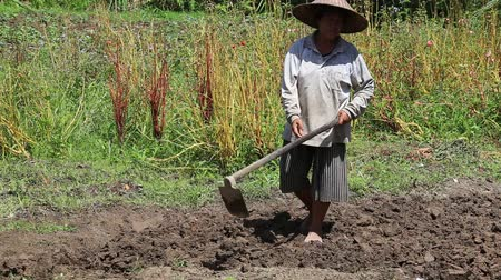 starość : BALI, INDONESIA - FEBRUARY 22, 2015: Unknown old woman farmer holding spade at field. Daily activities of female farmer in order to feed themselves and their families