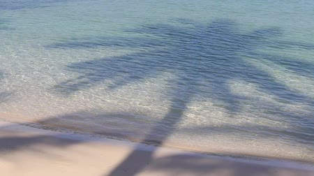 folhas : Coconut palm tree shadow and sea water wave on the beautiful tropical beach in island Koh Phangan, Thailand