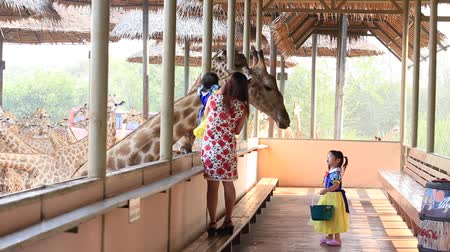 uzun boylu : BANGKOK, THAILAND - FEBRUARY 18, 2016: Unidentified thai woman and children feed and petted a giraffe in Safari World. Bangkok, Thailand