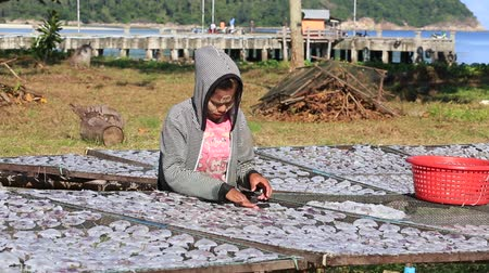 kalmar : KOH PHANGAN, THAILAND - NOVEMBER 16, 2015: Unknown Thai woman lays squid drying in the fishing village. Fishing is main occupation and income source on the island