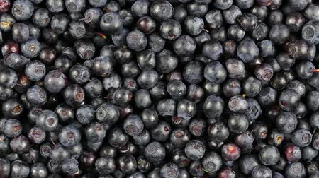 jagody : Fresh, ripe blueberries rotate, wild berry. Bilberry clockwise rotation. Close up Wideo