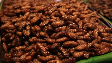 chrysalis : Edible roasted and spiced meal worms, Bugs fried on street food in Thailand. Fried larva is the food on the Thai market closeup. Stock Footage