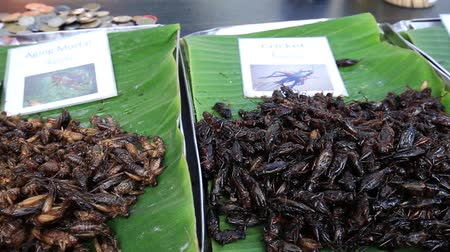 silkworm : Street thai food: Edible roasted and spiced meal worms. Bugs fried on street food in Thailand. Fried larva is the food on the night market, close up