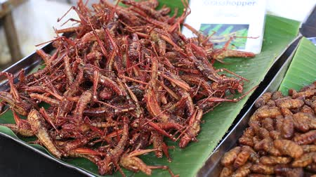 solucan : Street trade food: edible roasted and spiced meal. Bugs fried on the night food market in island Koh Phangan, Thailand. Close up Stok Video