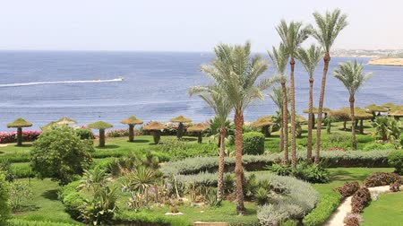 slunečník : SHARM EL-SHEIKH, EGYPT - MAY 23, 2018: Beautiful hotel, palm trees near the beach and the red sea in Sharm El Sheikh, South Sinai, Egypt