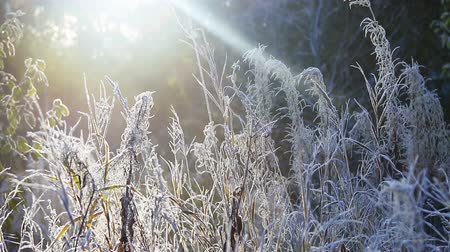 geçen : grass is frozen in ice crystals on the background of the setting sun. Wind and Blizzard moves the grass Stok Video