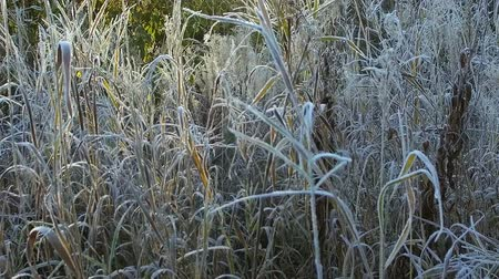 grass is frozen in ice crystals on the background of the setting sun. camera movement Stock Footage