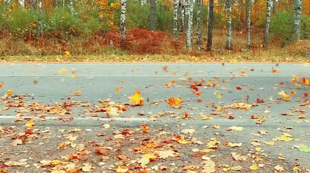 fallen autumn leaves scatter after driving on the highway. 120 fps video Stock Footage