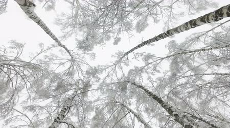 Winter forest in the snow. Snow and large snow drifts on the ground and the branches of trees