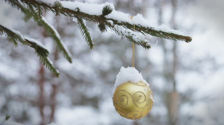 önemsiz şey : Christmas ball hanging on the Christmas tree in the winter forest