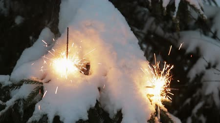 firecracker : burning sparklers on the Christmas tree in the winter forest
