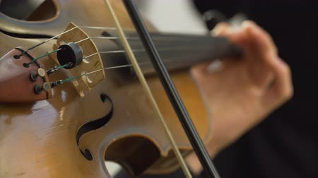 симфония : Close-up of musician playing at violin