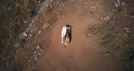 stallion : Wild Horses graze in the mountains of Abruzzo, Italy. Aerial drone footage video