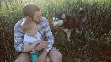 сибирский : Father and son playing with a dog on the wheat field. Fathers Day Family concept