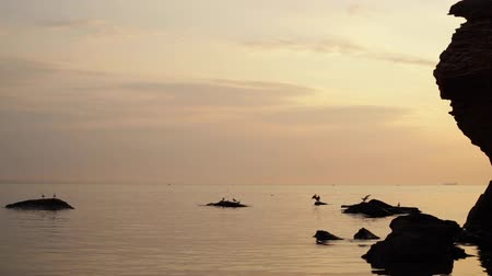 Beautiful golden sunset (sunrise) on the sea, complete calm, flying seagulls. Selective focus. Stok Video