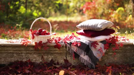 Autumn garden. There is a blanket, a basket of apples and a burgundy hat with rubber boots. Selective focus.