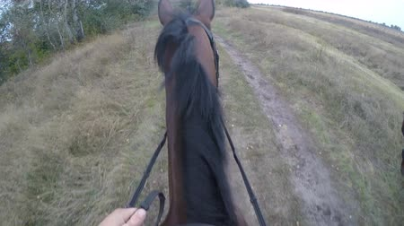 lovas : First person view of riding a horse. Point of view of rider walking at stallion at nature. Pov motion. Close up