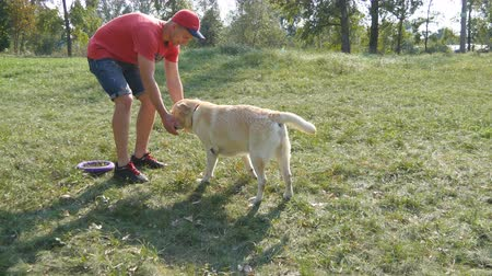 fetch : Young man and dog playing outdoor at nature. Labrador or golden retriever and his male owner spend time together at the green meadow. Guy stroking domestic animal. Close up Stock Footage