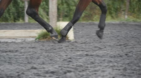 lovas : Foot of horse running on the sand. Close up of legs of stallion galloping on the wet muddy ground. Slow motion Stock mozgókép