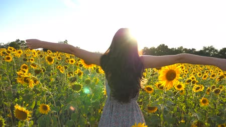 outside view : Beautiful girl in dress standing on yellow sunflower field and raising hands. Young unrecognizable woman raised arms in the yellow meadow with sun flare at background. Slow motion Rear back view