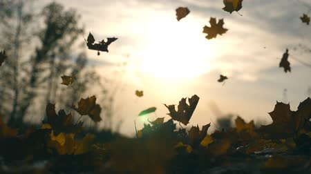 acalmar : Yellow leaves falling in autumn park and sun shining through it. Beautiful landscape background. Colorful fall season. Slow motion Close up