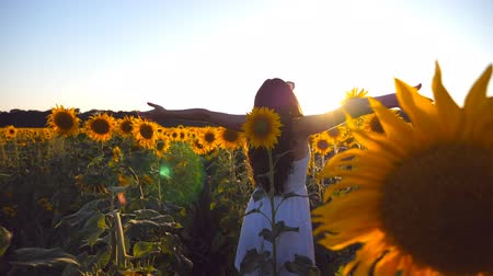k nepoznání osoba : Young girl standing at the field of sunflowers and raising her hands up. Woman enjoy by landscape and freedom at the meadow. Rear back view Slow motion Close up