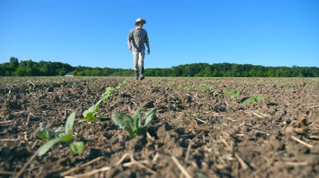 Low angle view of young male farmer going through the small green sprouts of sunflower on the field at sunny summer day. Blue sky at background. Concept of agricultural business. Close up Stock Footage