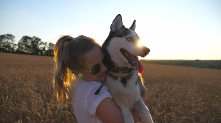 Close up of happy girl in sunglasses hugging and kissing her siberian husky dog among the spikelets at meadow. Female owner with blonde hair spending time together with her pet on golden wheat field